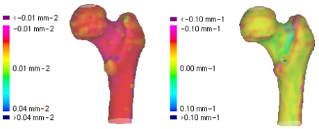 Gaussian and mean curvatures calculated from a femur surface